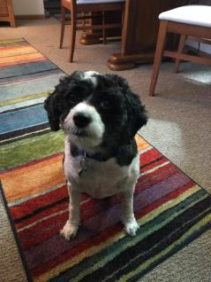 LILLY BELLE AFTER HAIRCUT 1
