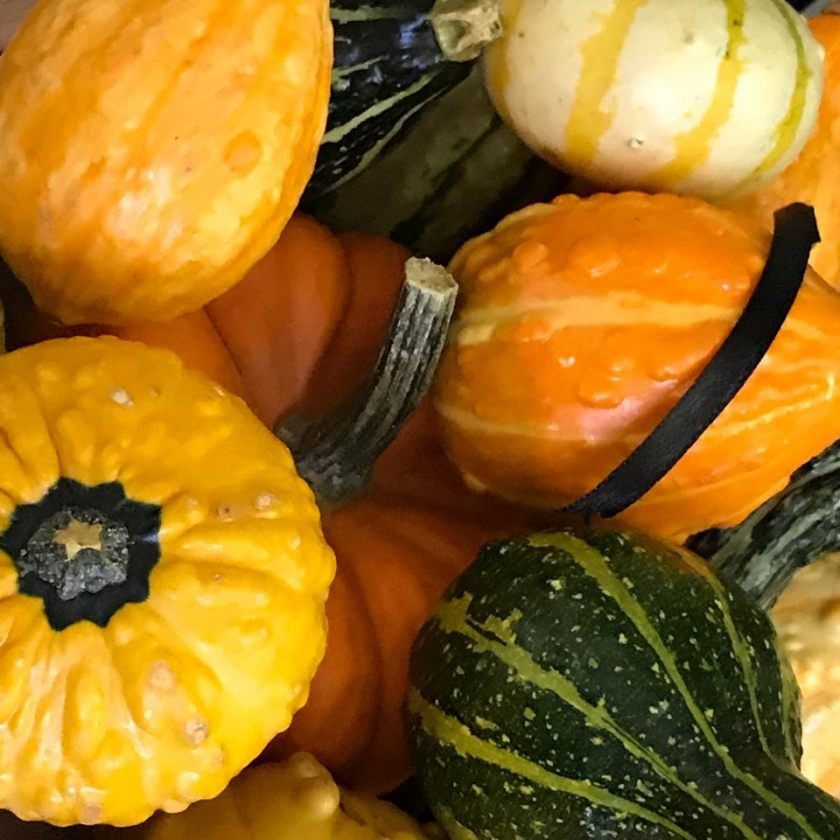GOURDS GALORE 1