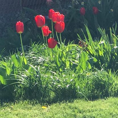 SPRING FLOWERS 2 1