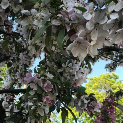 SPRING FLOWERS 2 13