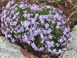 SPRING FLOWERS 2 2