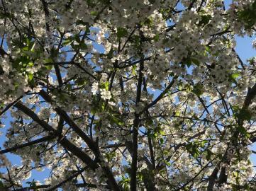 SPRING FLOWERS 2 3