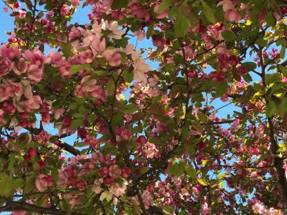 SPRING FLOWERS 2 4