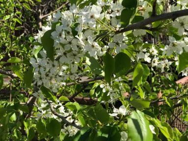 SPRING FLOWERS 2 5