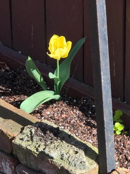 SPRING FLOWERS 2 6