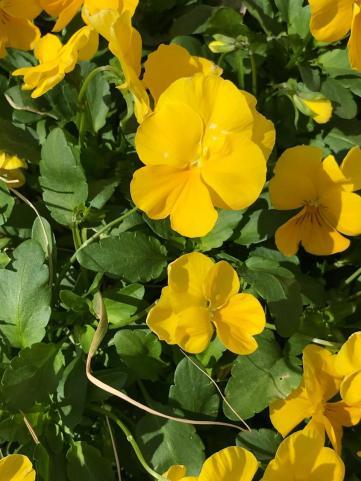 SPRING FLOWERS 2 7