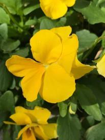 SPRING FLOWERS 2 8