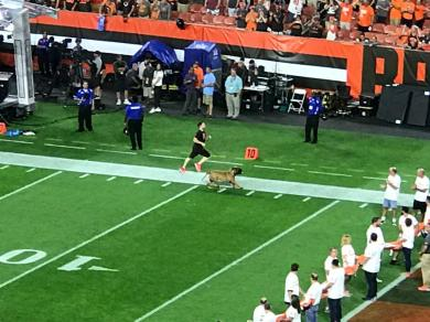 JETS VS BROWNS @FIRST ENERGY STADIUM CLEVELAND OHIO 9-20-2018 21